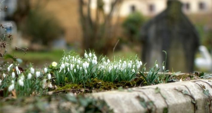 Bucanece nel cimitero di Highgate, Londra.