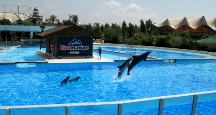 Zoomarine Roma, la vasca dei delfini.