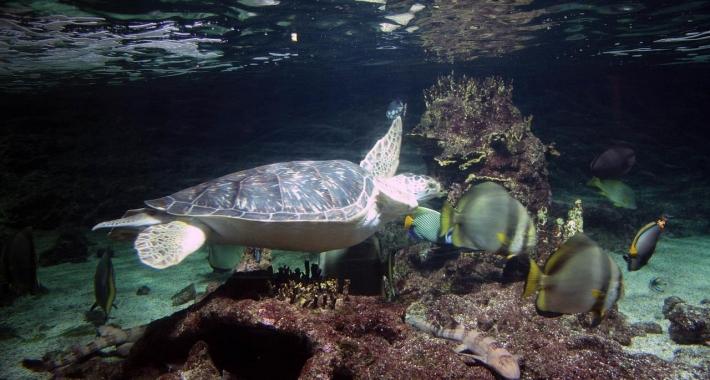 Tartaruga dell'Acquario di Genova