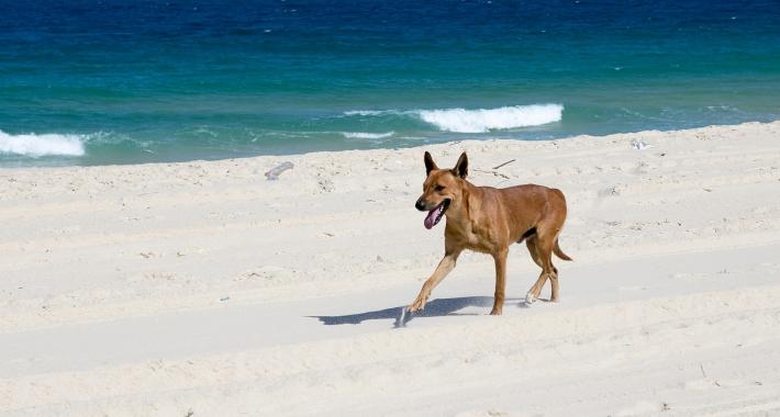 Letti A Baldacchino Per Cani : Vacanze con il cane a varese weekend con il vostro cane