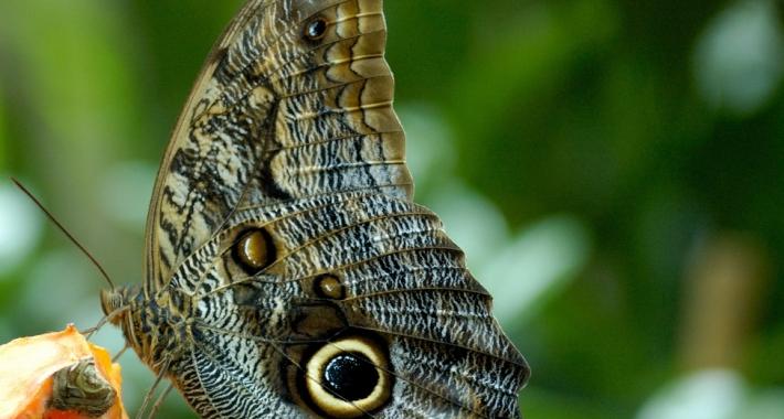 Farfalla della Casa delle Farfalle di Pistoia