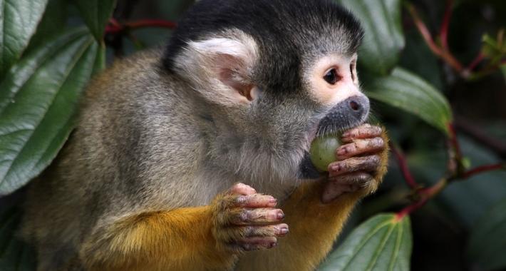 Scimmietta dello Zoo di Londra