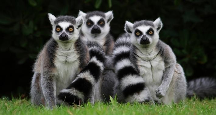 Lemuri del Parco Zoo Punta Verde di Lignano Sabbiadoro